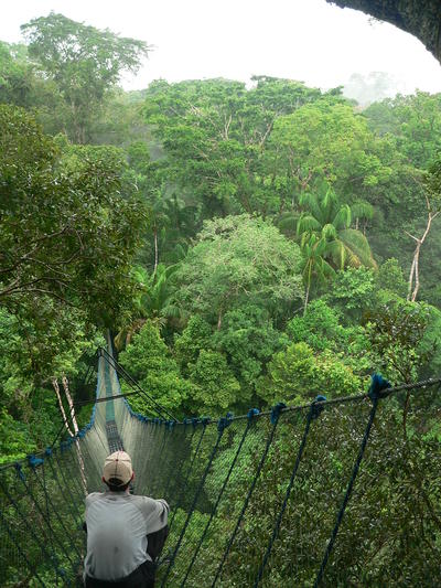 A canopy walkway in the trees of Peru