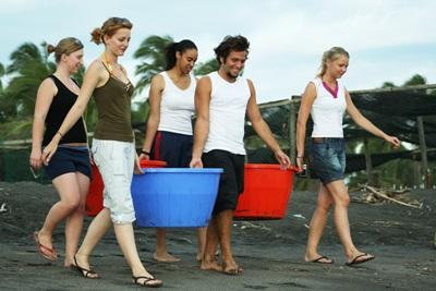 A group of volunteer carry buckets full of turtle hatchlings to the beach in Mexico, North America