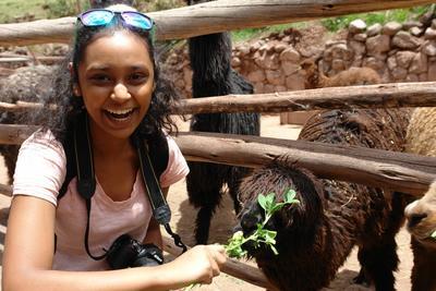 Female volunteer visits an alpaca while volunteering in Cusco