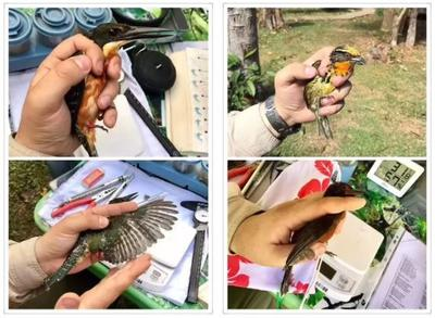 Using a variety of safe methods, the group take measurements of varies species of birds