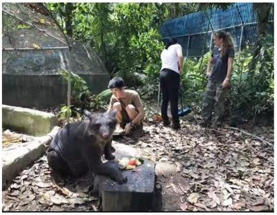 In Cholita's enclosure, the volunteers help to tidy up and make it cleaner for the bear