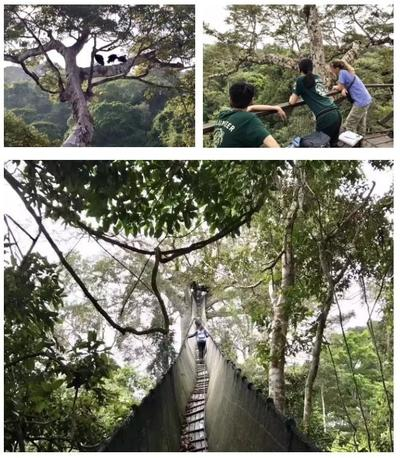 From atop South America's highest canopy walkway, the group begin a bird identifying activity