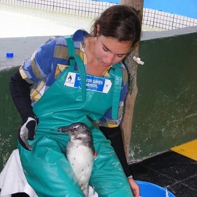 A volunteer on her gap year holds a penguin at a seabird conservation centre in South Africa.