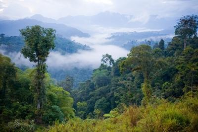 A beautiful shot of the Ecuadorian rainforest