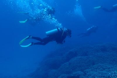 SProjects Abroad volunteers conduct survey dives to identify different reef species on the Belize Barrier Reef System