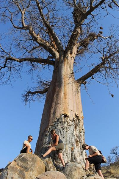 Projects Abroad Conservation volunteers take park in Baobab census and protection work