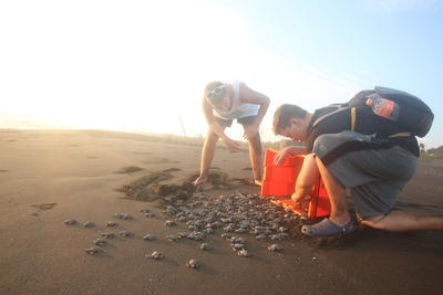 Conservation volunteers, Liam Read (L) of the UK, and Henry Falkner (R) of the United States, release newly hatched Olive Ridley sea turtles in Cuyutlan