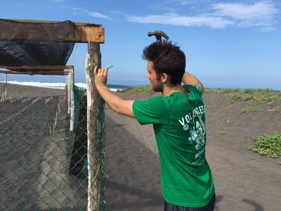 Protection for the sea turtle eggs are built on the beach in Mexico